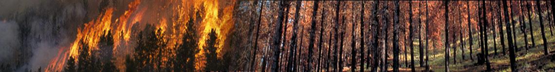 Fire Effects Portal