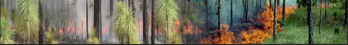 Southern Fire Portal
