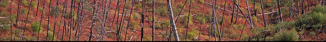 Fire Ecology Portal